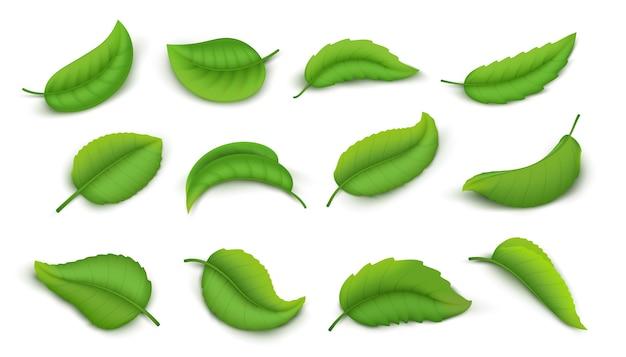 Realistische blätter. grüne frühlingspflanze verlässt isolierten satz