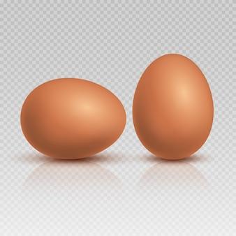 Realistische braune hühnereien. natürliche und gesunde bauernhoflebensmittelillustration.