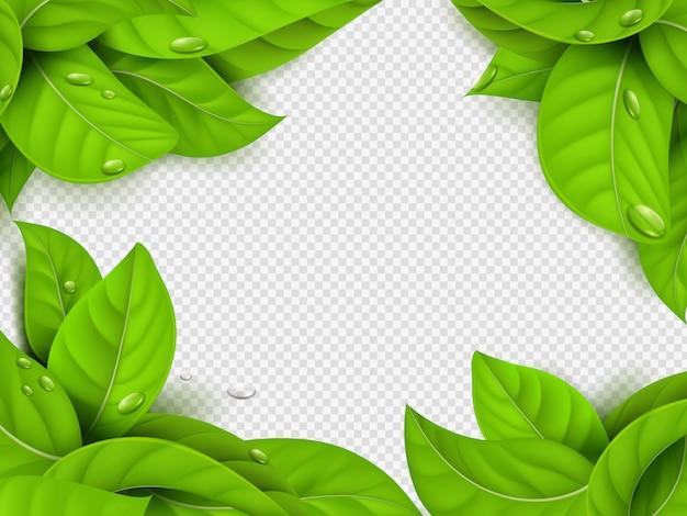 Realistische grüne blätter mit tropfenrahmenschablone mit transparentem hintergrund