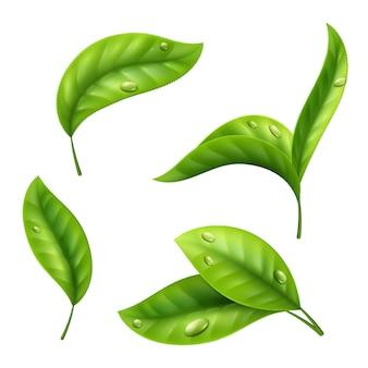Realistische grüne teeblätter mit tropfen auf weißem hintergrund