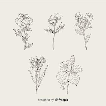 Realistische hand gezeichnete botanische blumensammlung