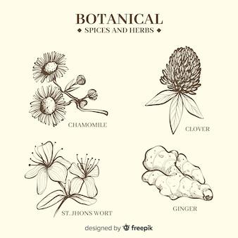 Realistische hand gezeichnete botanische gewürze und kräuter