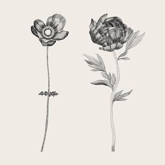 Realistische hand gezeichnete weinlesebotanik-blumensammlung