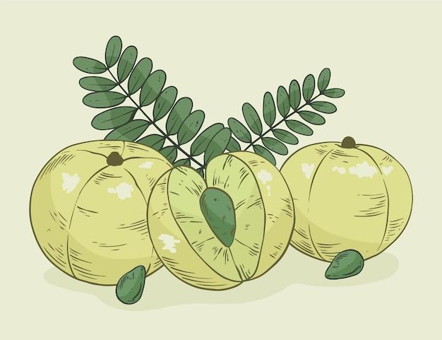 Realistische handgezeichnete amla-fruchtelemente