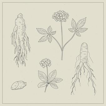 Realistische handgezeichnete ginseng-pflanzensammlung