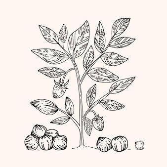Realistische handgezeichnete kichererbsenbohnen und -pflanze