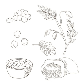 Realistische handgezeichnete kichererbsenbohnen und pflanzensammlung