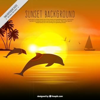 Realistische hintergrund eines sonnenuntergangs mit delfinen