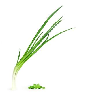 Realistische illustration der jungen grünen zwiebel isoliert