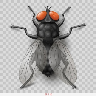 Realistische insektenfliege im vektor