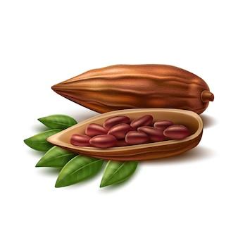Realistische kakaobohnen