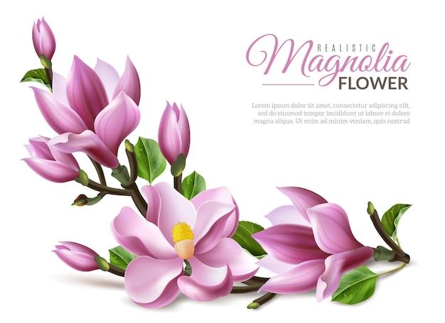 Realistische magnolienillustration