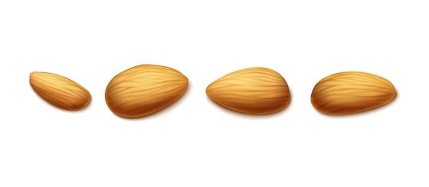 Realistische mandelnüsse in verschiedenen formen set