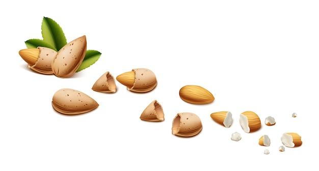 Realistische mandelnüsse, schalen und krümel isoliert