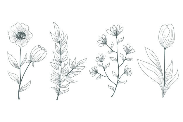 Realistische natürliche wilde blumen und kräuter