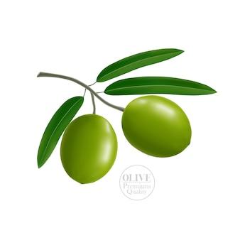 Realistische olivenillustration
