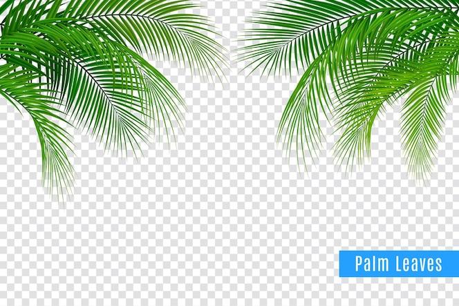 Realistische rahmenzusammensetzung des tropischen blattpalmenzweigs mit transparentem hintergrund und gruppen von blättern mit text