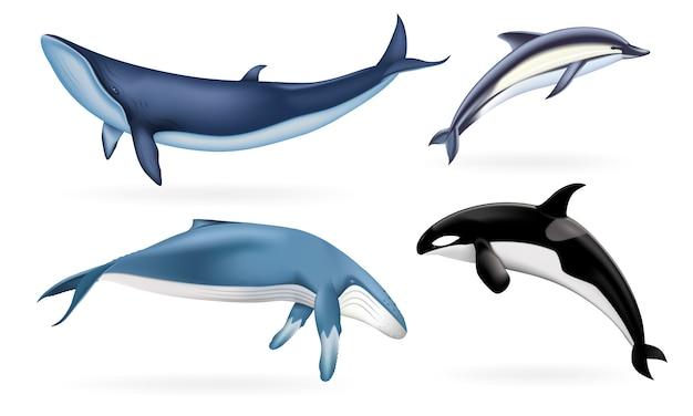 Realistische reihe von walen, delfinen und orcas