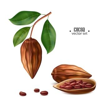 Realistische rohe kakaobohnen mit samen am baum