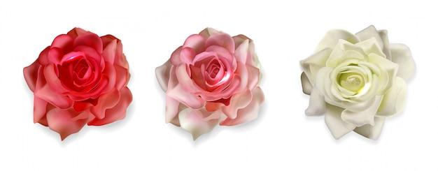 Realistische rose isoliert