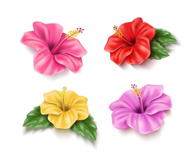 Realistische rot-rosa-gelbe hibiskusblüten setzen tropische pflanzen für poolparty-sommerferien