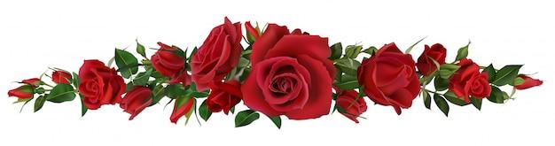 Realistische rote rosengrenze. blumenblütenelemente, schöne blätter und blühende blütezusammensetzung des burgeons für natürliche botanische liebesrahmenelemente der hochzeitskarte und der einladungsillustration