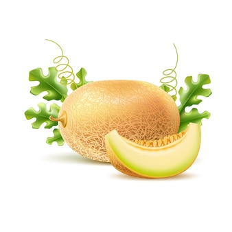 Realistische runde melone mit scheibe vectordelicious süße exotische frucht
