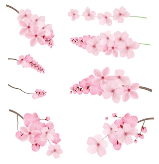Realistische sakura branch tree mock-ups