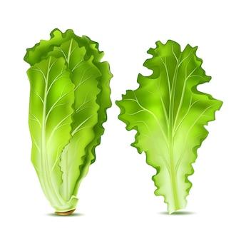 Realistische salatsalatblätter