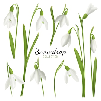 Realistische schneeglöckchenblume stellte mit editable text und bildern von februar-messemädchen auf leerer hintergrundillustration ein
