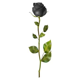 Realistische schwarze rose.