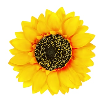 Realistische sonnenblumenblume isolierte illustration