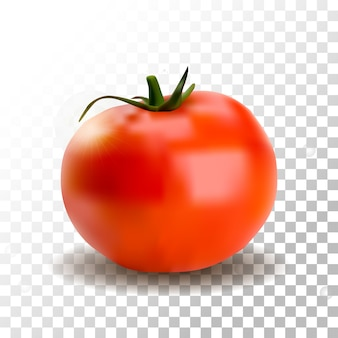 Realistische tomate isoliert