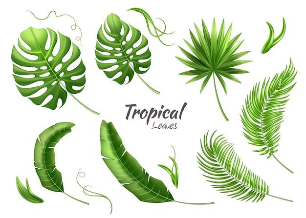 Realistische tropische blätter setzen 3d dschungelillustration