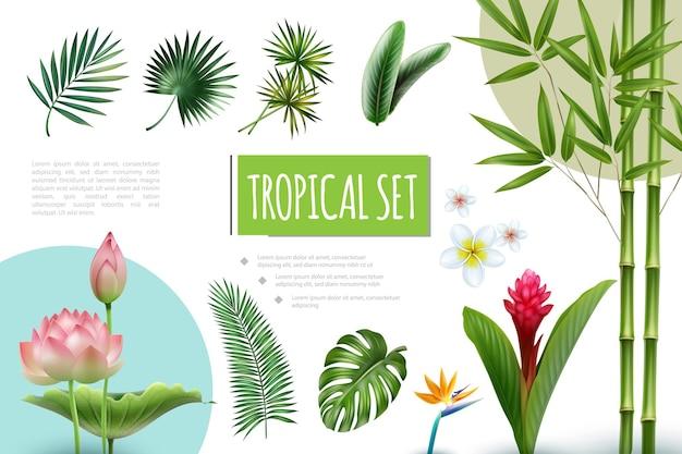 Realistische tropische pflanzensammlung mit lotusrot-ingwer-plumeria-paradiesvogelblumenbambusstammpalmenmonstera und strelitzia-blattillustration