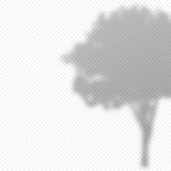 Realistische vektortransparente überlagerung verwischte schatten der baumblätter. gestaltungselement für präsentationen und mockups. überlagerungseffekt von baumschatten.