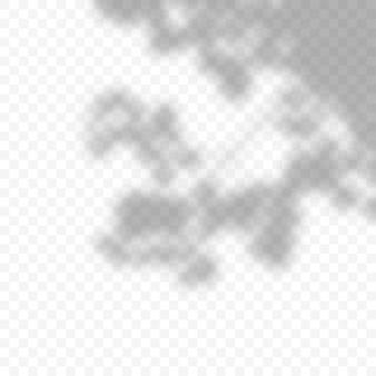 Realistische vektortransparente überlagerung verwischte schatten der zweigblätter. gestaltungselement für präsentationen und mockups. überlagerungseffekt von baumschatten.