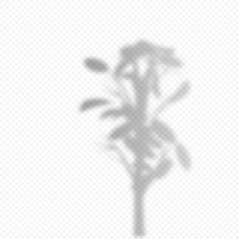 Realistische vektortransparente überlagerung verwischte schatten der zweigzimmerpflanze. gestaltungselement für präsentationen und mockups. überlagerungseffekt von baumschatten.