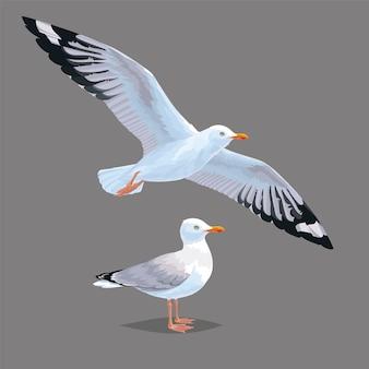 Realistische vogelmöwe lokalisiert auf grauem hintergrund. fliegen und stehen. illustration des realistischen vogels europäische silbermöwe