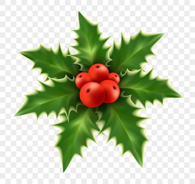 Realistische weihnachtsstechpalme auf hintergrund isoliert. vektorillustration eps10
