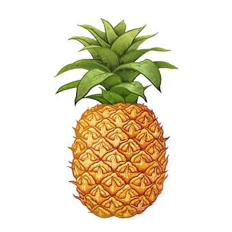 Realistische zeichnung der ananas.