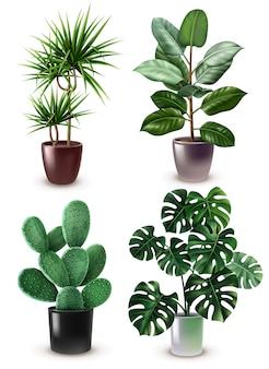 Realistische zimmerpflanze icon set