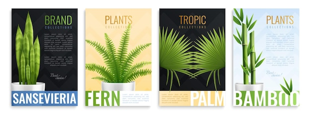 Realistische zimmerpflanzen in topfkarten mit sansevieria-farnpalmen- und bambusbeschreibungen