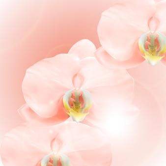 Realistischer 3d rosa orchideenblumenhintergrund.