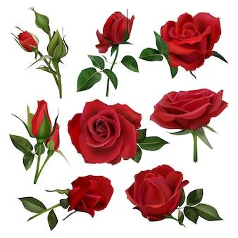 Realistischer dekorativer rosenstrauß. blumensträuße mit roten rosen, blumen mit blättern und burgeon, blumenblütenstrauß gesetzt. schließen sie oben natürliche botanische elemente für hochzeitseinladungskarte