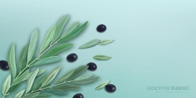 Realistischer eukalyptus mit zweigen, grünen blättern und oliven