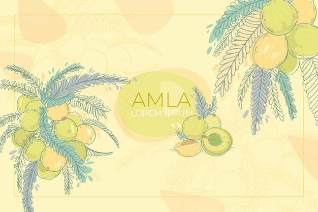 Realistischer handgezeichneter amla fruchthintergrund