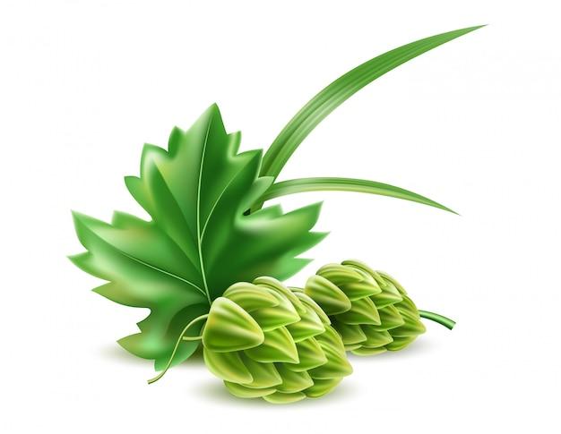 Realistischer hopfenzapfen mit grünen blättern für bier und brauerei.