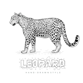 Realistischer leopardvektor, handgezeichnete tierillustration