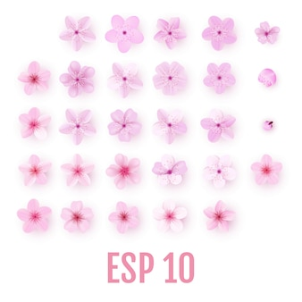 Realistischer rosa kirschblüte-blumenblattikonensatz. kirschblüten